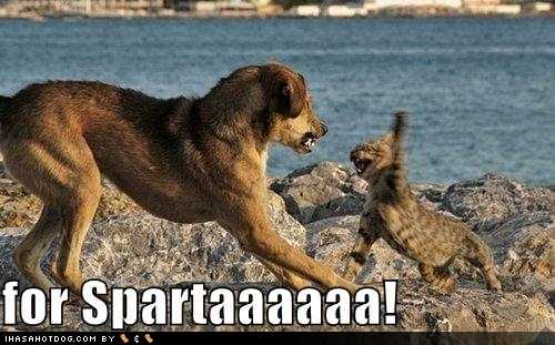 Funny-dog-pictures-cat-and-dog-battle-in-sparta1